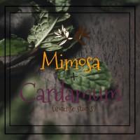 Mimosa+Cardamum Incense Sticks